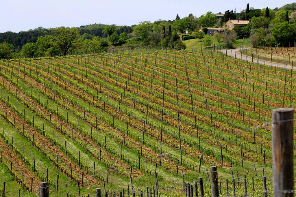 greppone-mazzi-vineyards